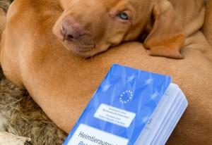 EU Heimtierausweis für Welpen